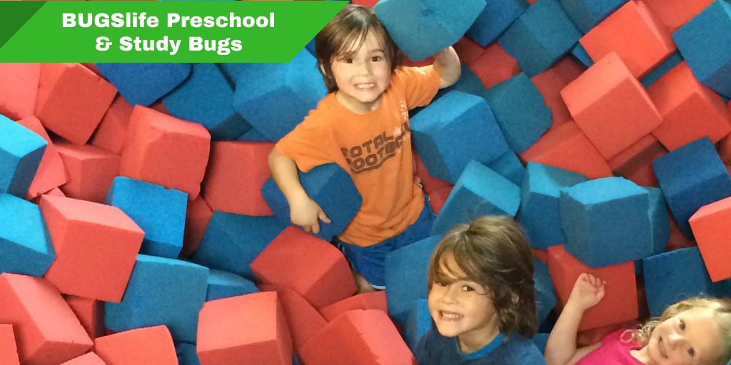 Preschool & New Study Bugs